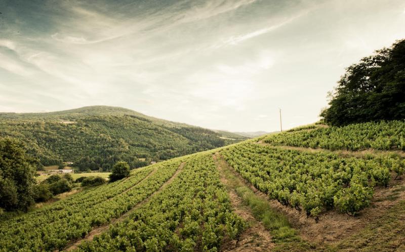 lieu de tournage dans les vignes