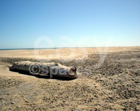 photos de repérages de décors naturels plages sauvage camargue